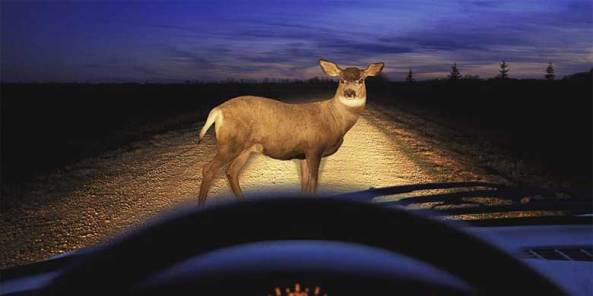 Deer at night - State Farm